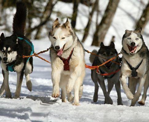Различни видове нагръдник за куче
